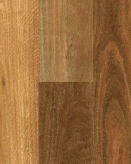 Southern Spotted Gum
